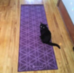 We carry only the highest quality yoga m