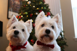 Everyone loves Christmas