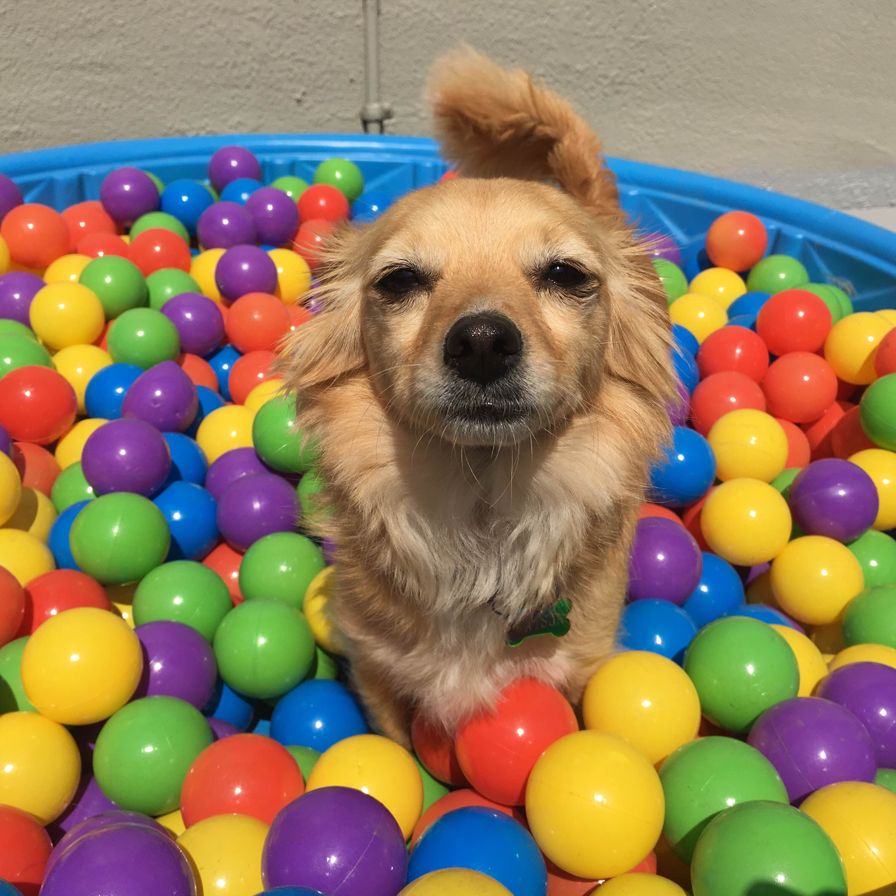 Watson, King of the Ballpit
