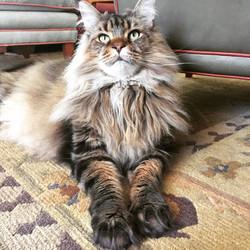 Majestic Max