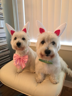 Easter Doggies