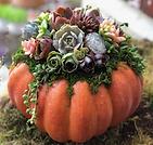 pumpkin art.png