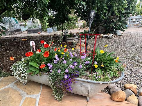 Tub garden.jpg
