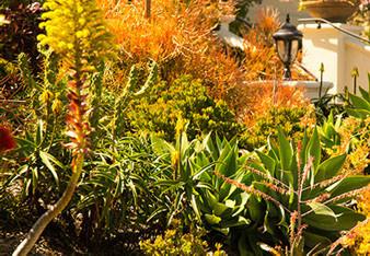 native-plants.jpg
