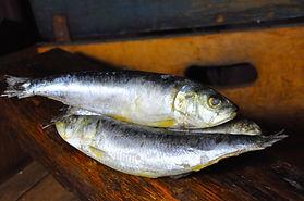 Sardines wild caught mediteranean .jpg