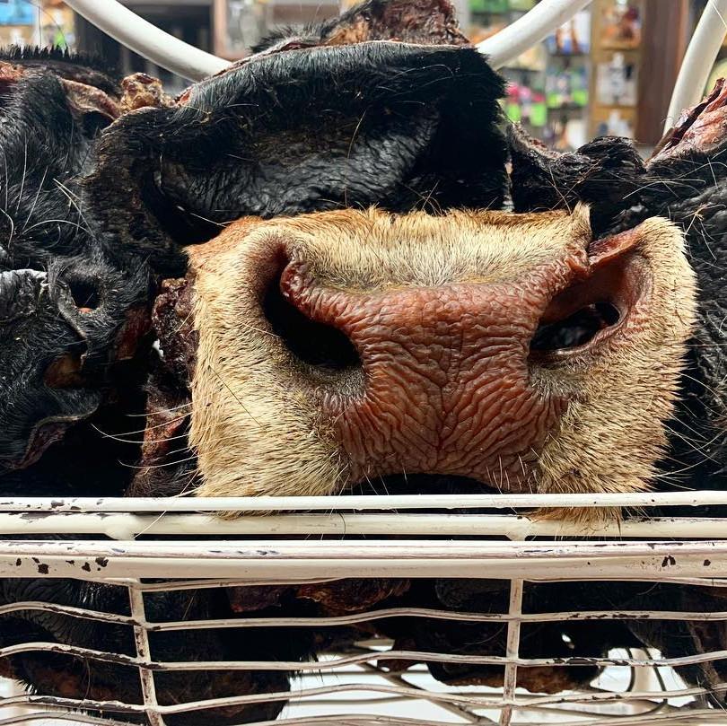 Moooooo!  Dried Cow Snouts