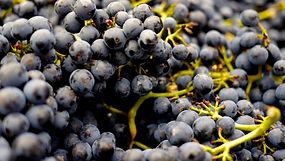 abundance-alcohol-berries-berry-357742.j
