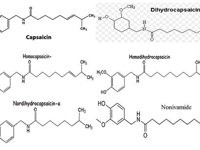 Tổng Quan Capsaicin Trong Ớt Và Tác Dụng Dược Lý