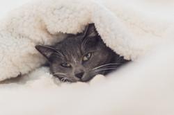 cat-3841448.jpg