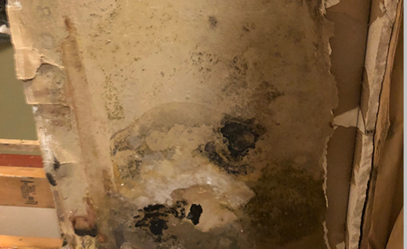 Mold 2.png