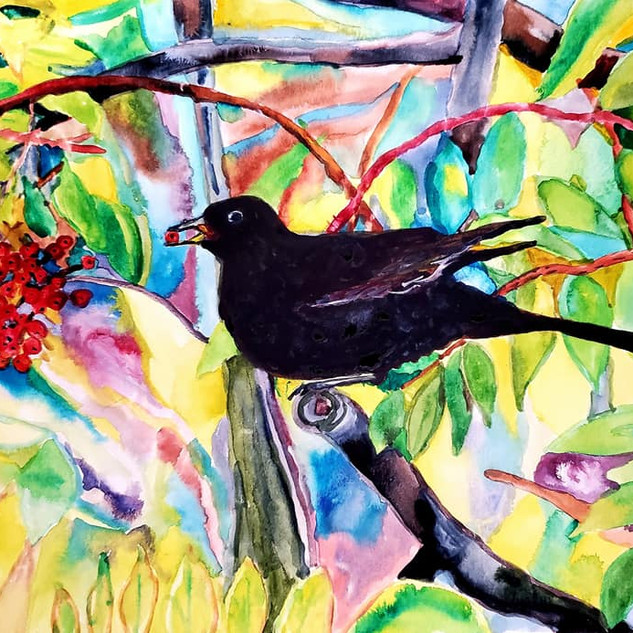 Irish Black Bird