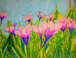 Flowers in a Field