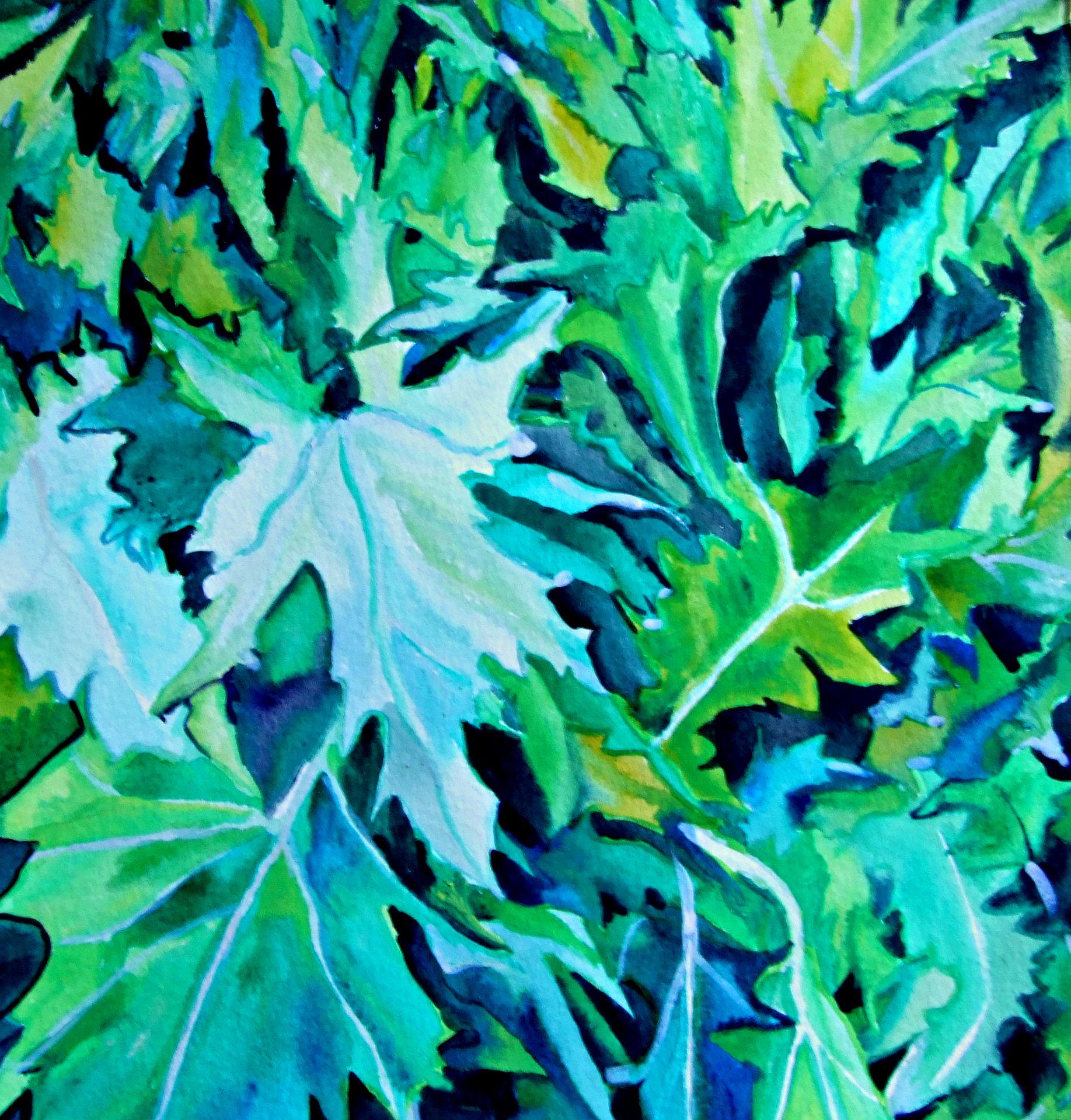 Mizuna Plant
