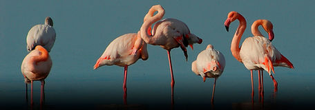 Los Flamencos Natural Park Tour | Newtours Colombia | Daytours