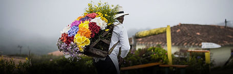 Daytours | Medellín | Newtours Colombia
