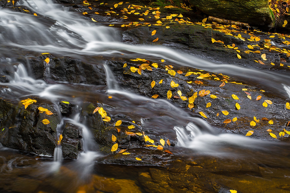 Wet Yellow Leaves