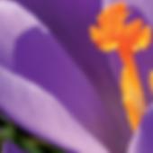 Capture d'écran 2019-03-27 à 18.16.35.pn