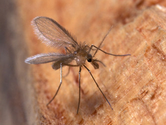 Cuidado con los mosquitos. Protege a tu mascota de la leishmania