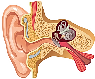 Hearing Aids Hearng Tests Tinnitus Ringing in Ear