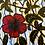 Thumbnail: Tecido Floral Hibiscos