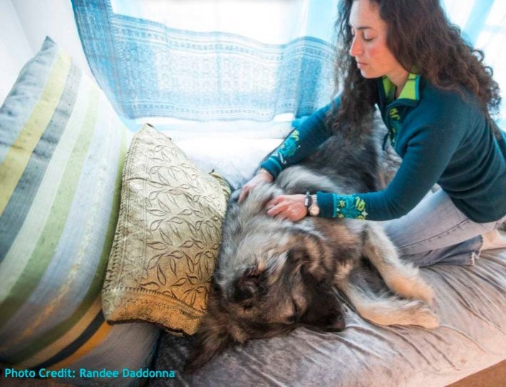 Canine Therapeutic Massage Therapy