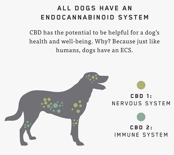 AquaDogDen-Charlotte's Web CBD Oil-Dogs.