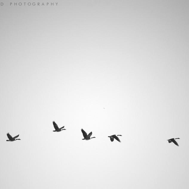 Line of Flight