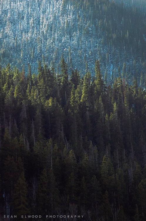CREST OF TREES