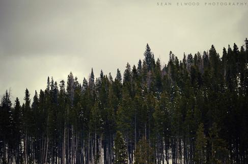 Trees on the Hillside