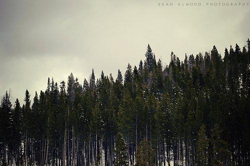 TREES ON THE HILLSIDE (Digital Download)