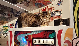 Clyde is Pinball Creative's tabby cat he lives close by and like to sleep on pinballs