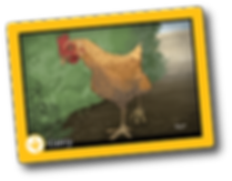chicken-1_back.png