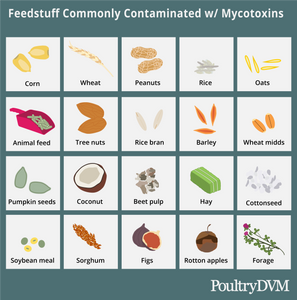 Feedstuff commonly contaminated with mycotoxins