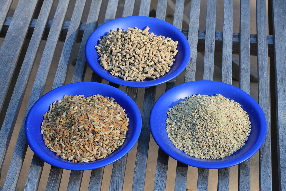 chicken feed: pellet, crumbles, grain