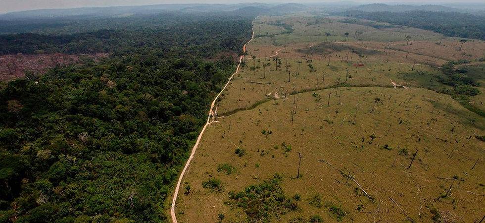 deforestation.jpg