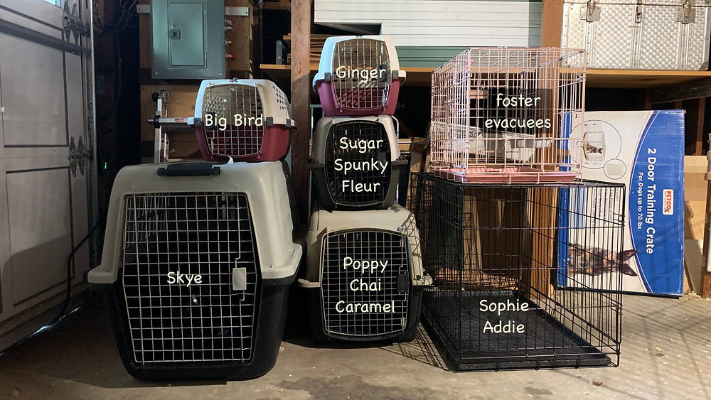 Crates ready to evacuate all animals at Clorofil