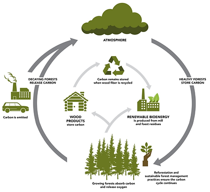 mnrf-sustainable-forest-mgmt-carbon-storage 2.png