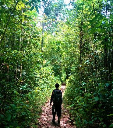 ketapang hutan.jpg
