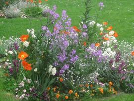 Le Touquet - Flowers.JPG