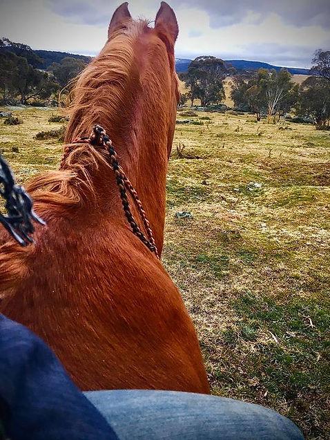 Ashka Animal Communicator