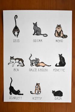 Cat Line Up