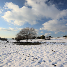 Snow Removals