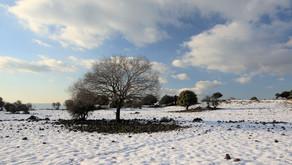 Kapha Season - Winter Yoga