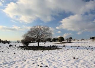 Jahreszeiten (1) : Der frühe Winter
