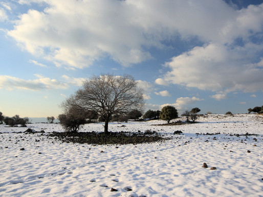 How Wildline Solutions Can Help You Grow Your Self-Sustainable Lifestyle This Winter