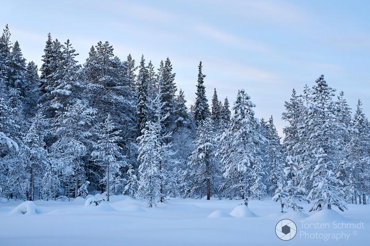 2020-01 Finland-005-TSC_2367.jpg