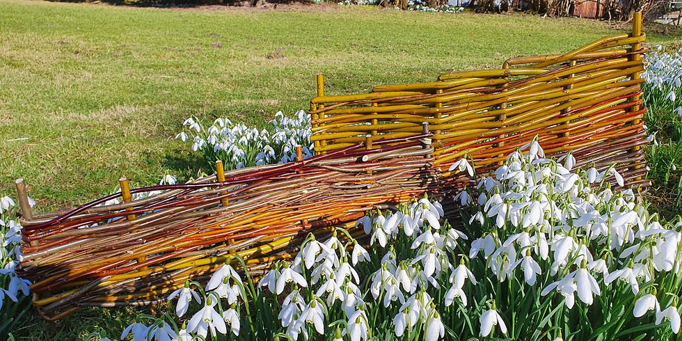 Willow weaving for beginners.  £75.00 per person (all materials included).