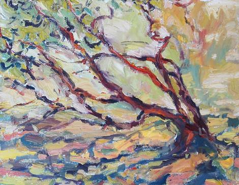 Moment With Manzanita 11x14 oil on canvas, en plein air
