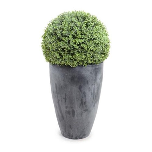 Boxwood Potted Topiary