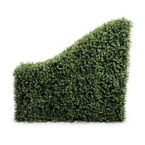 Boxwood Sloping Hedge